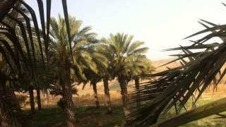 getlinkyoutube.com-อินทผลัมที่อิสราเอล