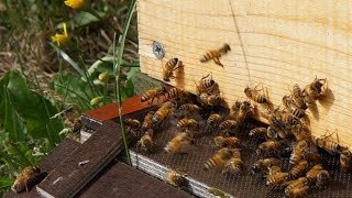 Поилка для пчел. Финляндия.
