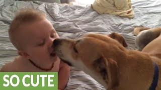Baby thrilled to receive kisses from doggy friend