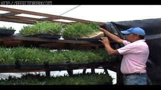 getlinkyoutube.com-forraje verde  en Oaxaca