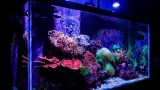 My 90 Gallon Reef Tank Update