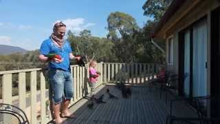 getlinkyoutube.com-Hand Feeding Wild Australian Parrots