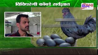 getlinkyoutube.com-Peek perni - Black hen 'Kadaknath' in Indapur