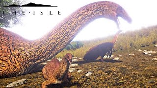The Isle - BABY TURKEY GROWS UP TO BE BIG AND STRONG! HERD PROTECTS BABIES & MORE ( Gameplay )