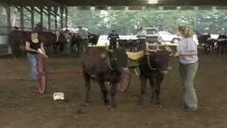 getlinkyoutube.com-Training Oxen