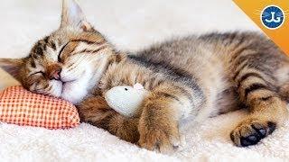 getlinkyoutube.com-Train Your Cat to Let You Sleep