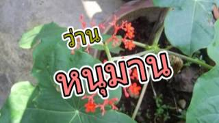 getlinkyoutube.com-ว่านไทย 9 ชนิด