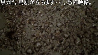 getlinkyoutube.com-<閲覧注意>酸素系漂白剤で10年使った洗濯槽のお掃除 ーwashing machine tub with oxygen bleach.