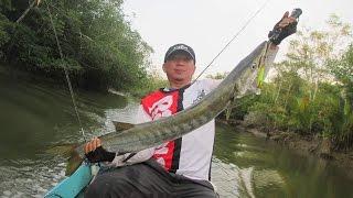 getlinkyoutube.com-Mancing Casting di sungai paloh