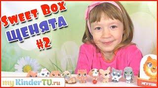 getlinkyoutube.com-ПУШИСТИКИ (СОБАЧКИ) Sweet Box. #2 Распаковываем собачек Свит Бокс с Ариной