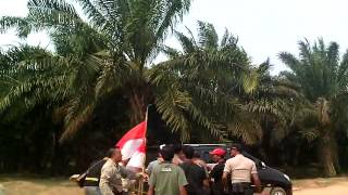 getlinkyoutube.com-detik 2 penangkapan sahabat nedi sugianto di perkebunan kelapa sawit PT STP (Wilmar Group)