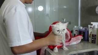 getlinkyoutube.com-Banho em Gato Persa
