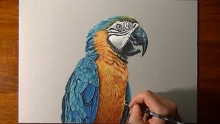 getlinkyoutube.com-Drawing a realistic parrot