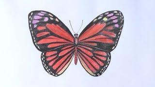 getlinkyoutube.com-Уроки рисования. Как нарисовать бабочку