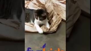 "flushyoutube.com-Furkids kitties say ""THANK YOU FOR THE GIFTS""!"