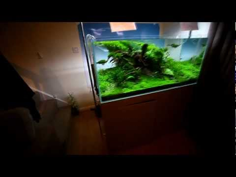 UK Nature Aquarium