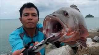 getlinkyoutube.com-Mangrove jack fishing