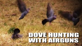 getlinkyoutube.com-Dove hunting with airguns