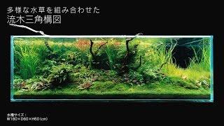 getlinkyoutube.com-[ADAview] 180cm水槽レイアウト 流木三角構図編