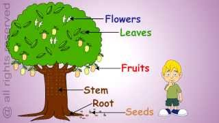 getlinkyoutube.com-Uses of Plants- Learn About Plants