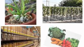 getlinkyoutube.com-Food Sovereignty & Seeds For Life