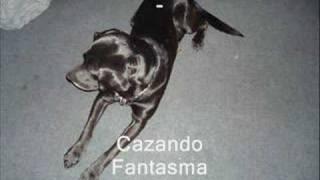 getlinkyoutube.com-Perros caza fantasmas