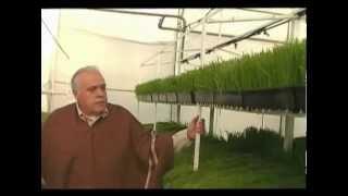 getlinkyoutube.com-Primer vivero de Forraje Verde Hidropónico en Argentina