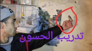 getlinkyoutube.com-chardonneret مبديع في ترويض طائر الحسون