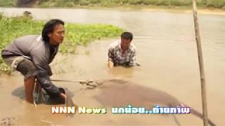 getlinkyoutube.com-NNN News ปลาราหูยักษ์ จ สิงห์บุรี