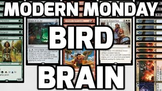 Modern Monday: Bird Brain (Match 2)