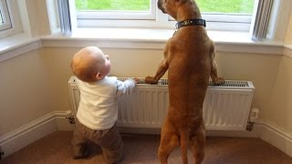 getlinkyoutube.com-Bébés mignons Jouer avec grands chiens Compilation Janvier 2015 [HD 720p VIDEO]