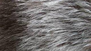 getlinkyoutube.com-وصفة سهلة، مضمونة وسريعة لإزالة الشيب من الشعر