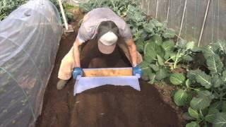 getlinkyoutube.com-菜園だより170118収穫・畝立・播種・間引き