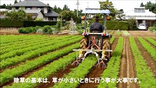 人参除草・S3カルチ(千葉県)