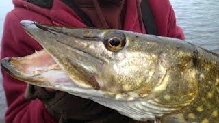 getlinkyoutube.com-Pike Fishing With Deadbaits - Rigs, Tips & Tactics