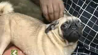 getlinkyoutube.com-Dog keeping: പട്ടി വളര്ത്തല് : Success story