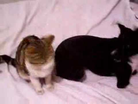funny dogs and cats video. funny cats and dogs video.