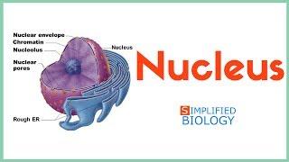 Nucleus for NEET, AIPMT, MCAT, AIIMS, JIPMER