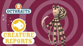getlinkyoutube.com-Octonauts: Creature Reports - Mimic Octopus