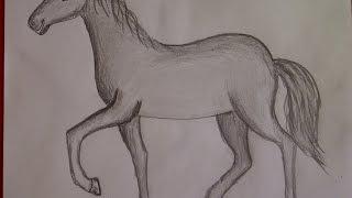 getlinkyoutube.com-Cómo dibujar un caballo. Como hacer un dibujo para principiantes. Como desenhar um cavalo