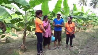getlinkyoutube.com-เกษตรคู่ซี้ ตอน กล้วยหอมทอง