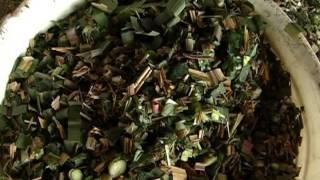 getlinkyoutube.com-Cómo cultivar Moringa Oleifera - TvAgro por Juan Gonzalo Angel