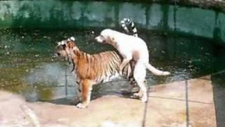 getlinkyoutube.com-śmieszne zwierzęta.