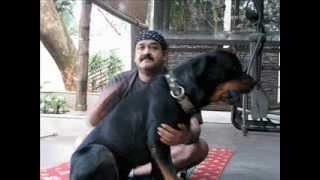 getlinkyoutube.com-Mohanlal With His pet Dog!