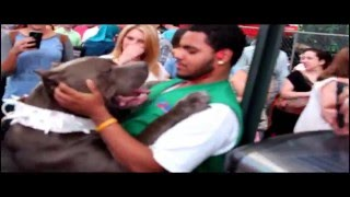 getlinkyoutube.com-Huge Blue Bully XL Pitbull scares tourists at Times Square :  Beware!