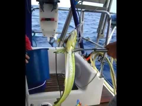 Croisière naturiste Antilles Transatlantiques - http://www.mothaline.fr