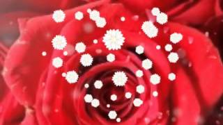 getlinkyoutube.com-สวัสดีวันอาทิตย์🌹🌹🌹 สุข สดชื่น สดใส สมหวัง ตลอดๆ