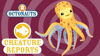 getlinkyoutube.com-Octonauts: Creature Report - Octopus