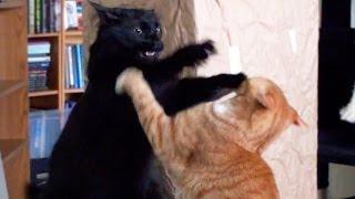 Los gatos y sus peleas amistosas