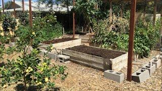 getlinkyoutube.com-How to Plant a Raised Bed Garden